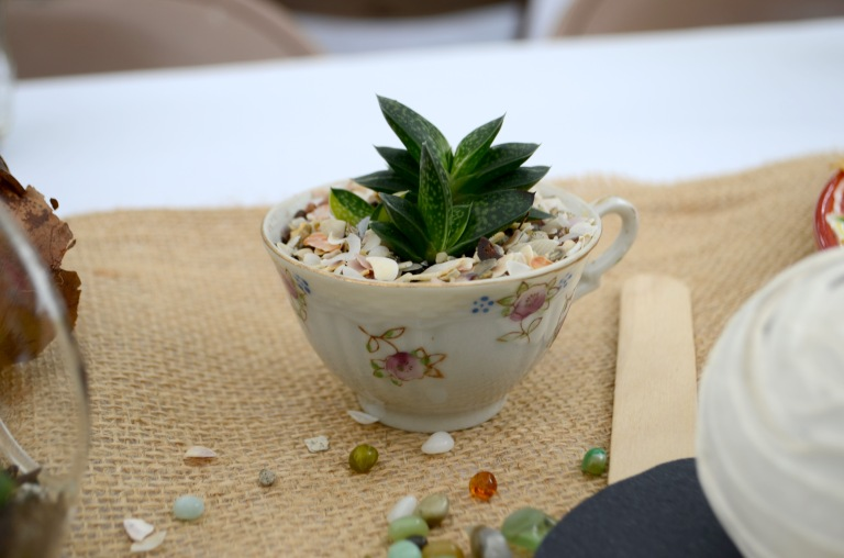 The succulents were potted in unique jars, tea cups, glass terrariums and tiny terra cotta pots.